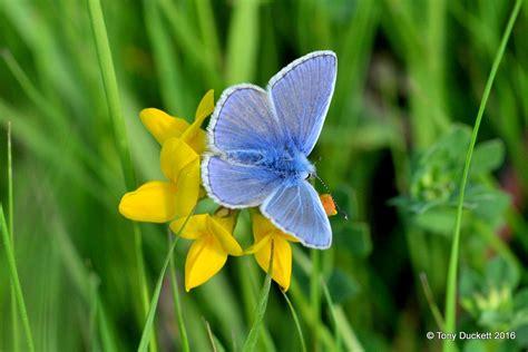 Small Blue why grassland invertebrates the royal parks