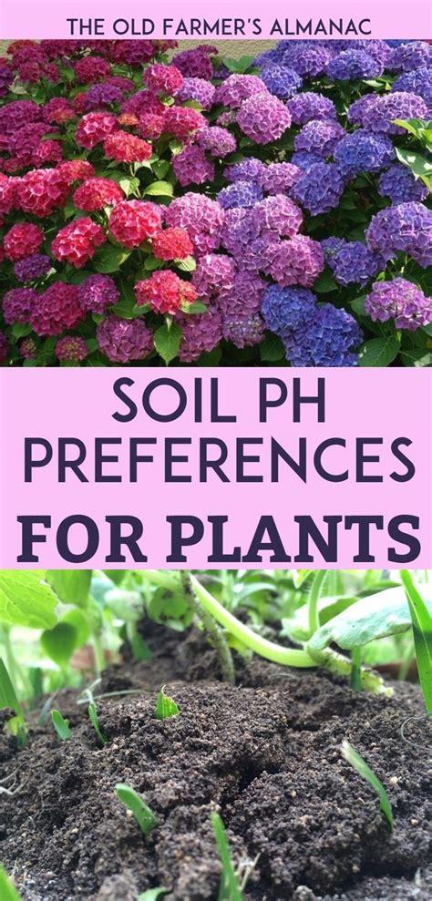 Best 25 Soil Ph Ideas On Pinterest Garden Soil What Soil To Buy For Vegetable Garden