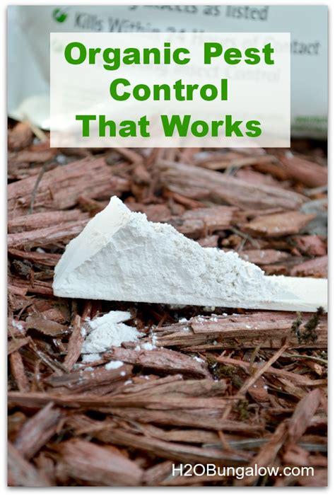 diatomaceous earth for garden pest diatomaceous earth food grade bug killer you can eat