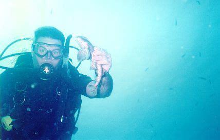 horn island boat explosion macna 10 marine aquarium conference of north america