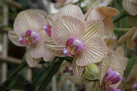 wann löst sich der schleimpfropf wann werden orchideen umgetopft