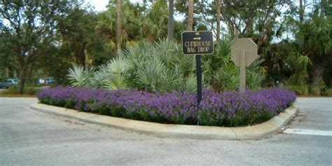 Landscape Lighting Gainesville Fl Gainesville Landscaping Plant Of The Month Angelonia