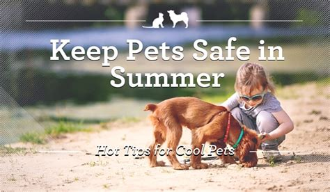 9 Tips On Keeping Your Outside Pet Safe From The Cold by Tips And Cool Products To Keep Pets Safe This Summer