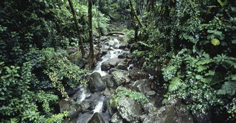american tropics the caribbean roots of biodiversity science flows migrations and exchanges books list of plants that only grow in the tropical rainforest