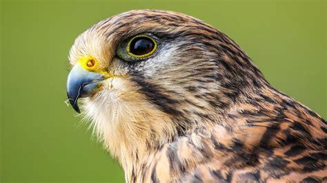 falcon wallpapers hd pixelstalknet