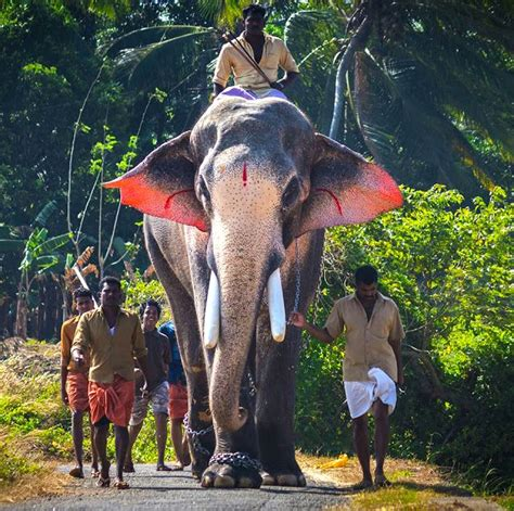 thechikottukavu ramachandran hd images   elephant