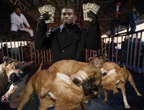michael vick fighting it s almost as if no michael vick was lying