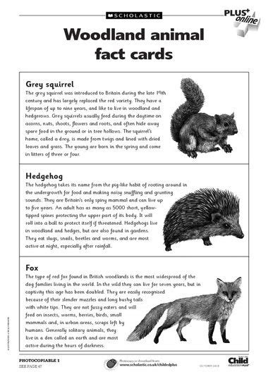 fact card template ks1 free primary animal worksheets animal fact cards to