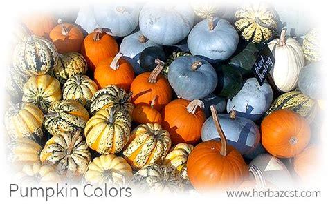 pumpkin color pumpkin colors herbazest