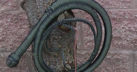 paracord bull whip bushcraft pinterest paracord weapons  paracord projects