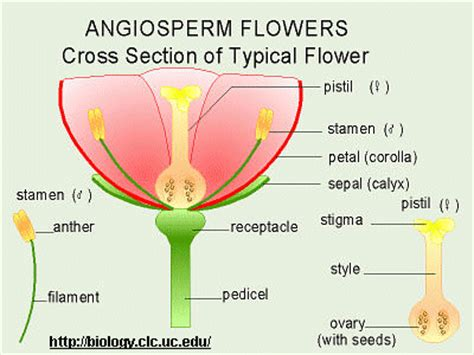 All Sections Of by Reproduction Of Flowering Plants