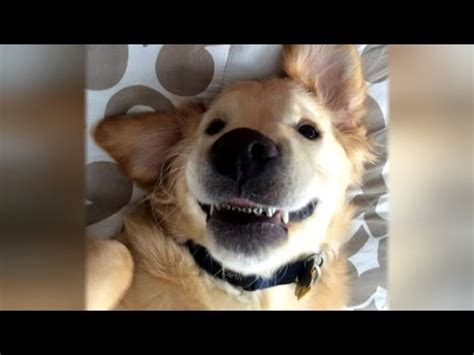 puppy braces puppy adorably gets braces to fix his dental problems