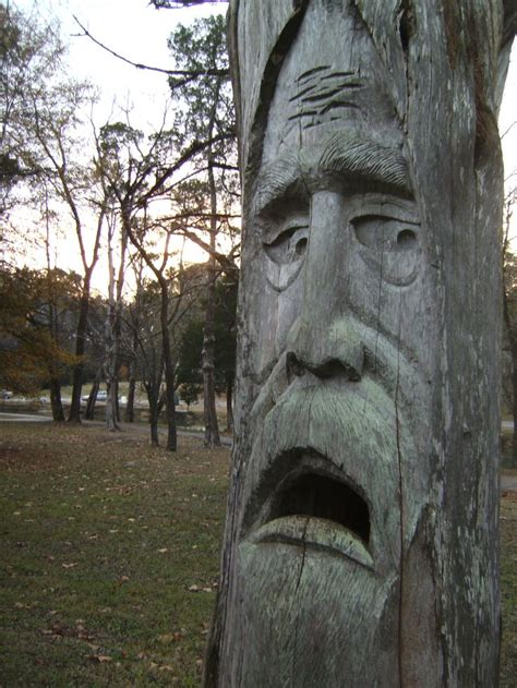 tree face pin by lisa taylor on trees pinterest