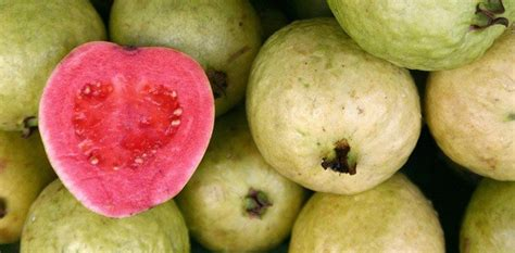 fruit facts 15 fruity facts about guavas the fact site