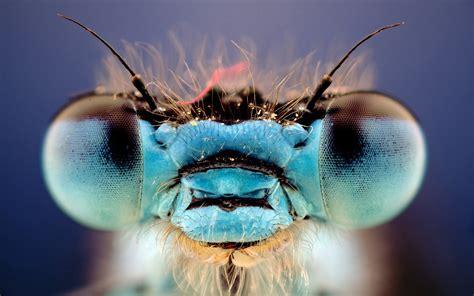 dragonfly eyes lazy penguins