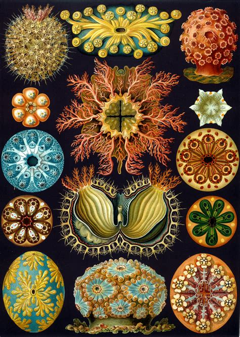 patterns in nature artwork ernst haeckel blacknuba