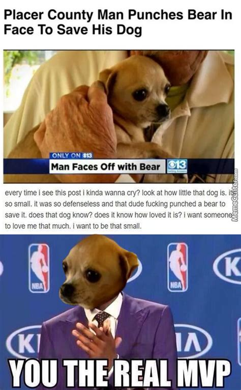 Pet Memes - pet memes best collection of funny pet pictures