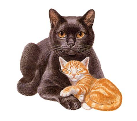 Stiker 3d Kucing gatti su immagini amo glitter