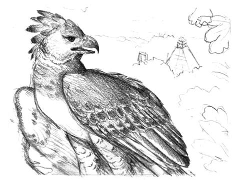 free coloring pages of harpy eagle