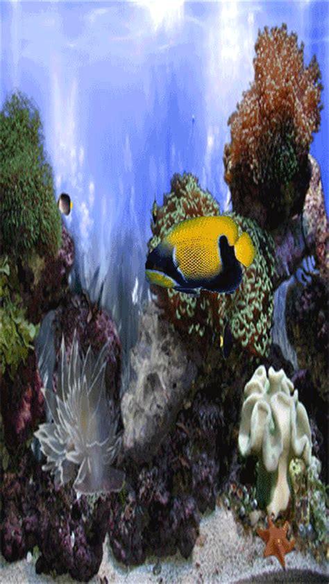 wallpaper bergerak ikan aquarium bergerak gif auto design tech