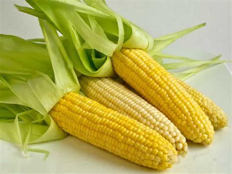 manfaat jagung bagi kesehatan tubuh manfaatcoid