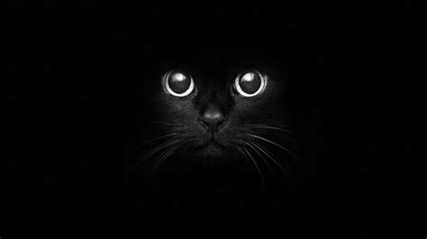 imagenes para fondo de pantalla gatos fondos de pantalla gato animalia descargar imagenes