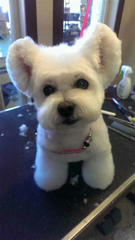 asian cuts for dogs 432 best asian fusion grooming images on pinterest