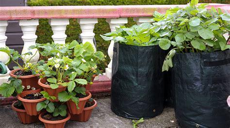 come fare un orto sul terrazzo come fare un orto sul terrazzo come fare un orto sul
