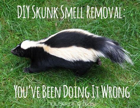 dog sprayed by skunk house smells best 25 skunk smell ideas on pinterest dog skunk skunk spray remedy and dog skunk bath