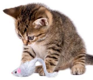 Gambar Kartun Kucing Lucu