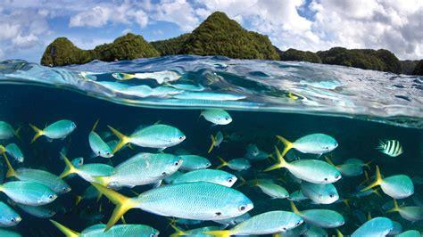 wallpaper palau diving center   wallpaper malakal