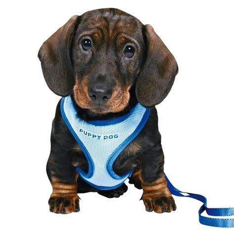 trixie puppy harness set blue small