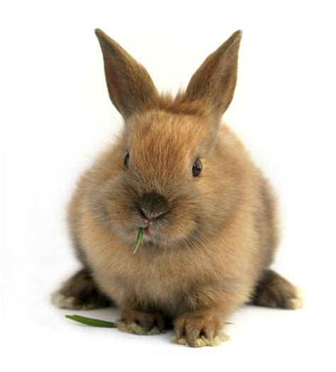 coding bunny pets pictures images photos