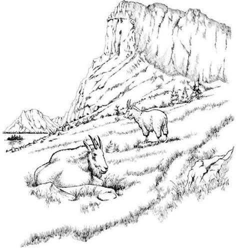 realistic goat coloring pages realistic mountains and goat coloring page