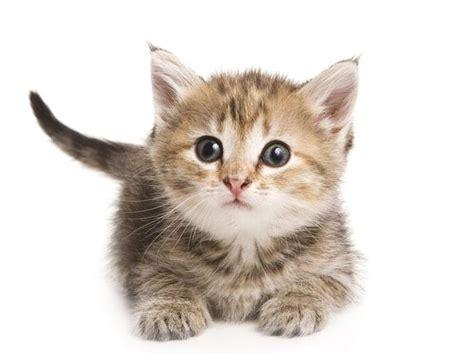 una noche un gato 191 qu 233 significa el ronroneo de un gato