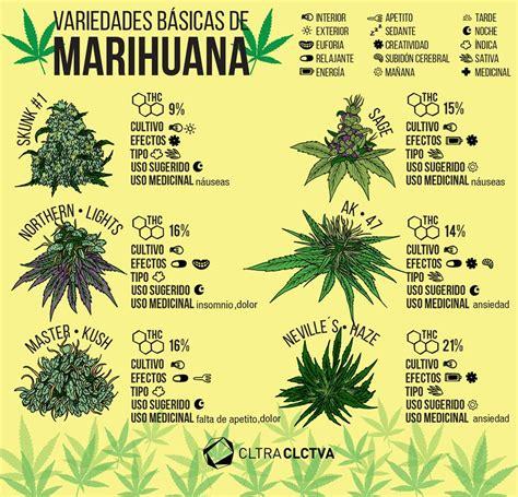 libro laforet nada critical guides mitos sobre la marihuana que no tienen nada de fundamento cannabis ganja and smoke weed