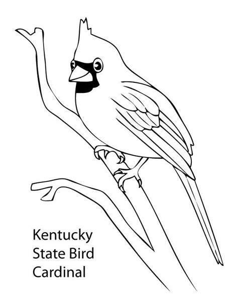 cardinal coloring pages preschool coloring pages cardinal bird coloring pages for kids