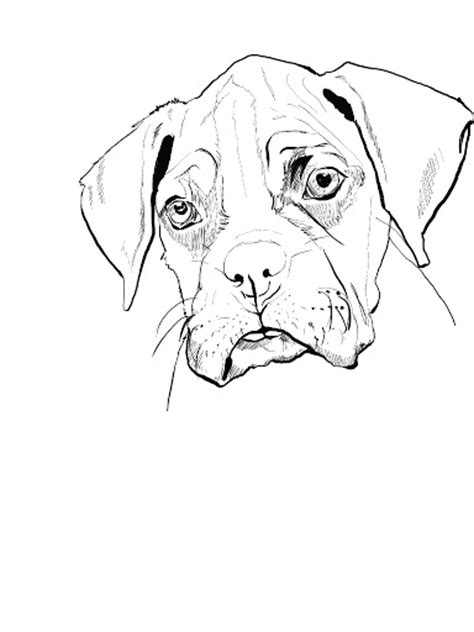 coloring pages of boxer puppies free boxer dog coloring pages