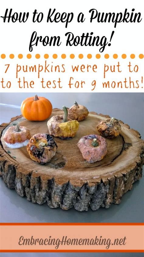 how to preserve pumpkins for fall tips for preserving pumpkins the scrap shoppe