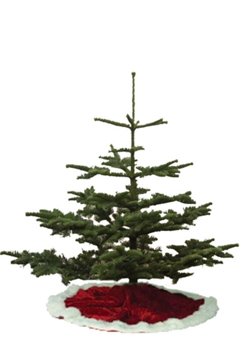 most popular type of real christmas tree tree types s best trees and pumpkins