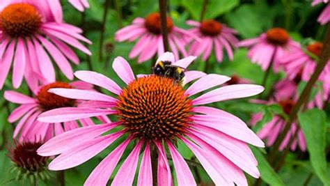 planting natives  beauty biodiversity minnesota