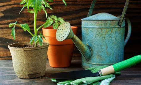 coltivare pomodorini in vaso coltivare i pomodori in vaso tutti i segreti per avere