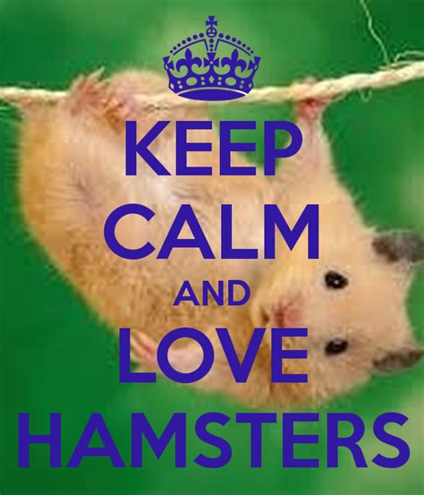 Wall Sayings Stickers keep calm and love hamsters keep calm and carry on image