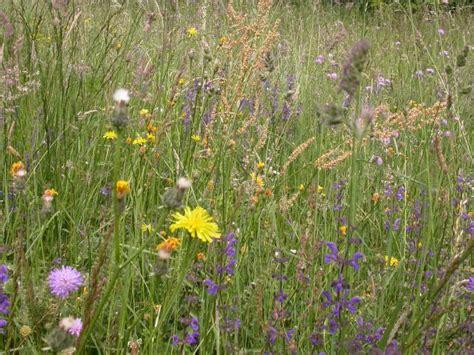 prato fiorito in inglese in giardino le stagioni garden club ravenna
