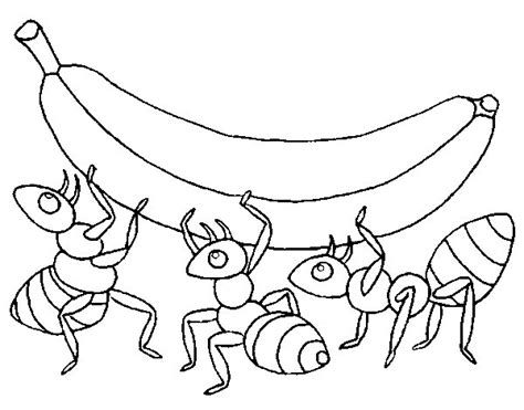 dibujos infantiles para colorear de hormigas dibujo de hormigas con pl 225 tano para colorear dibujos net