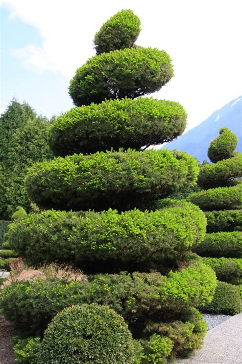 tree topiary 53 stunning topiary trees gardens plants and other shapes