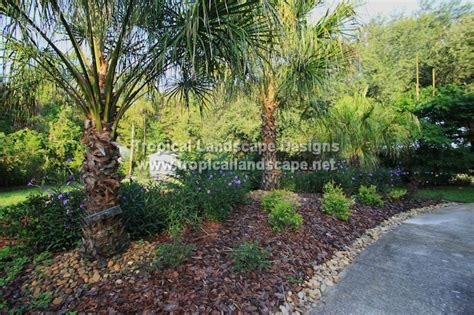 landscaping images tropical landscaping designs of ta bay