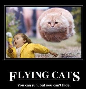 Flying Cat Meme - flying cat ball meme