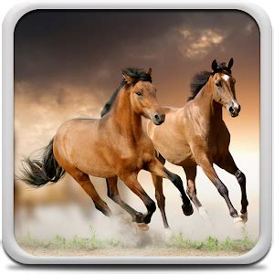 google images horses horses live wallpaper android apps on google play
