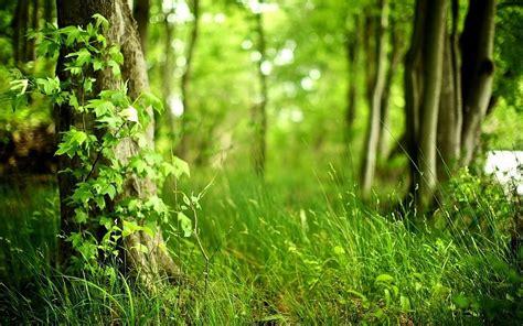 imagenes paisajes cos verdes paisajes lagos orilla hierba r 237 os ruta macro bosque verde
